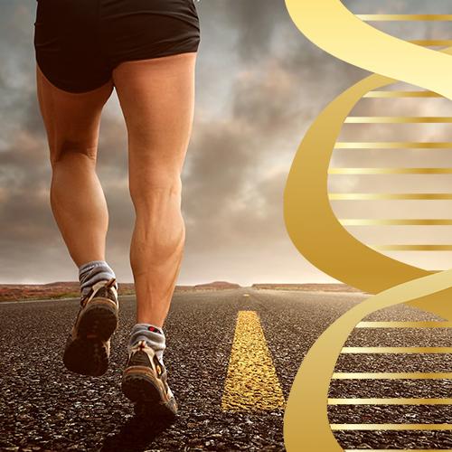 Мышцы, гены и генная манипуляция